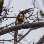 Wildlife Finca Malinche, Laguna de Apoyo, Nicaragua